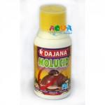 dajana-moluced