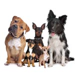 Разное для собак