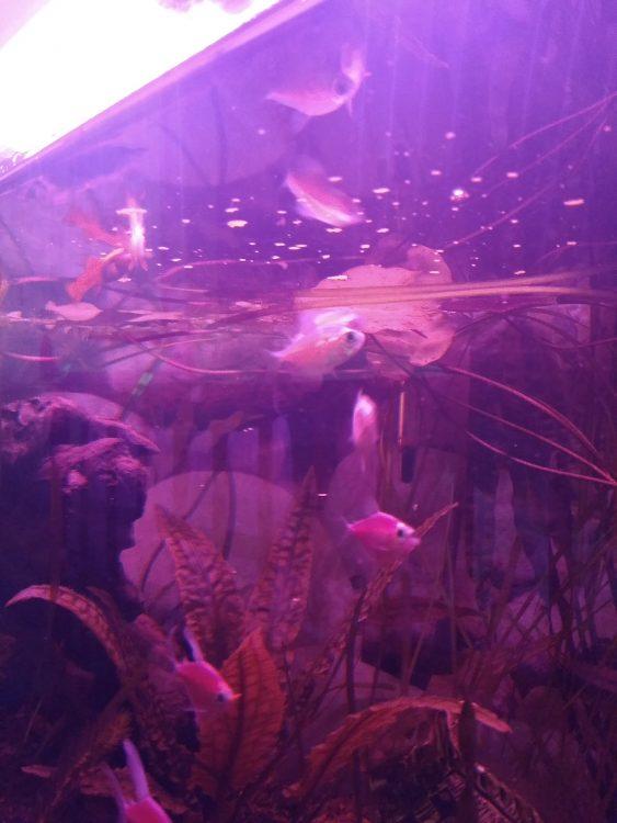 какой корм для усиления цвета рыб в аквариуме отзыв покупателя