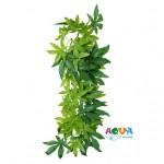 rastenie-dlya-terrariuma-shelk-abutilon-76236-triksi