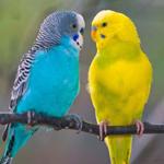 Разное для птиц