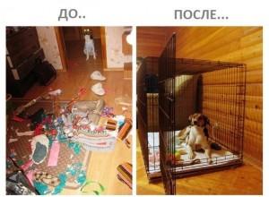 Kletka-dlya-sobaki_AQUAmaniya-