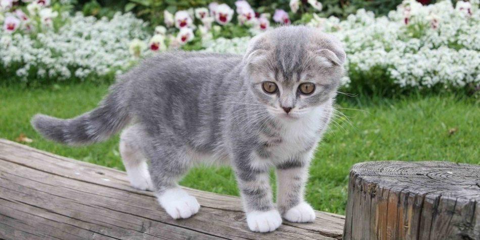 Сказка про котенка со сломанными ушками