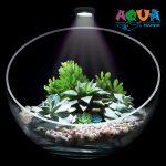 akvarium-florarium-wabi-set-dekorativnyj-nabor-dlya-vabi-kusa-collar