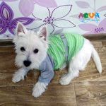 futbolka-glamur-m-pet-fashion