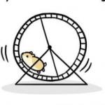 зачем хомяку колесо