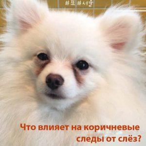 сухой корм для собак Superior Care
