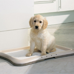 Туалеты для собак