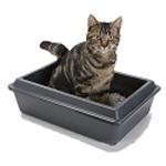 Средства по уходу для котов