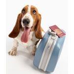 Путешествие с собакой